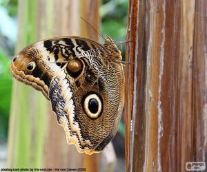Eule Schmetterling puzzle