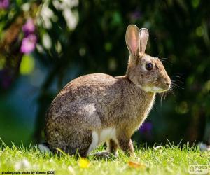 Europäische Kaninchen puzzle