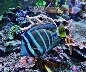 Exotische Fische puzzle