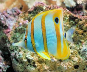 Fisch Borstenzähner puzzle