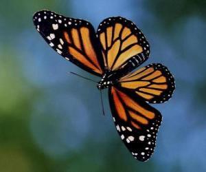 Fliegender Schmetterling puzzle