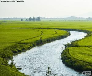 Fluss zwischen Reisfeldern puzzle