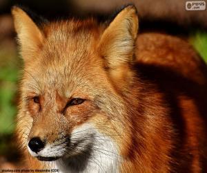 Fox-Kopf puzzle