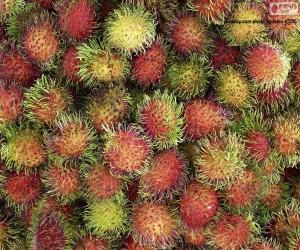 Früchte von Rambutan puzzle