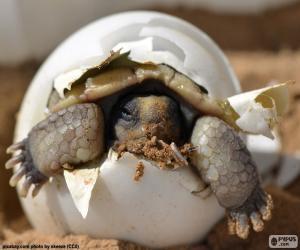 Geburt einer Schildkröte puzzle