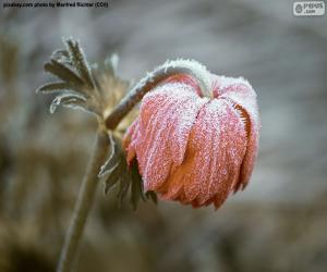 Gefrorene Blume puzzle