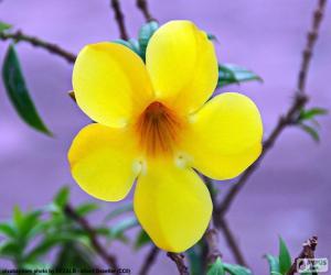 Gelbe Blume fünf Blütenblätter puzzle