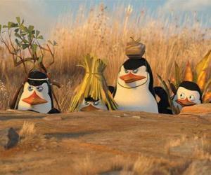 Getarnte Penguins puzzle