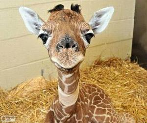 baby tiere