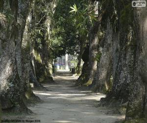 Große Bäume, Brasilien puzzle