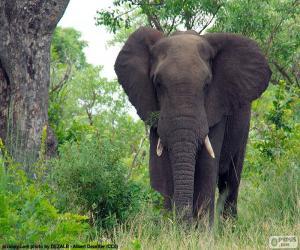 Großer Elefant im Wald puzzle