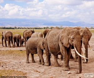 Gruppe von Elefanten puzzle