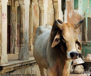 Heilige Kuh, Indien puzzle