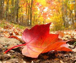 Herbst-Blatt puzzle