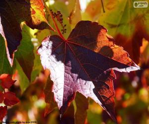 Herbst im Weinberg puzzle