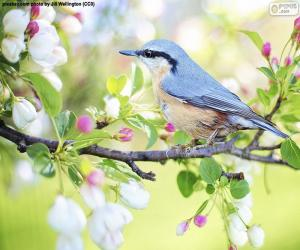 Himmelblauer Vogel puzzle
