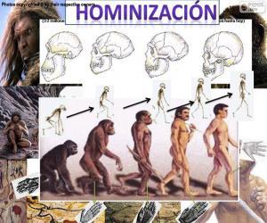 Hominisierungsprozess puzzle