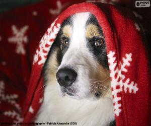 Hund-Weihnachten puzzle