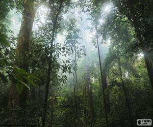 Innenraum des Dschungels puzzle