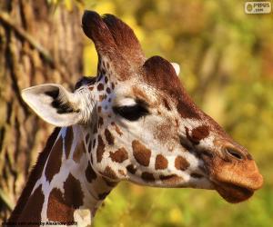 Junge giraffe puzzle