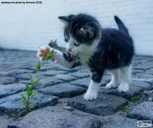Kätzchen und Pflanze puzzle