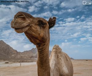 Kamel in der Wüste puzzle