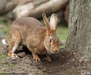 Kaninchen auf der Suche nach Nahrung puzzle