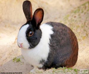 Kaninchen braun und weiß puzzle