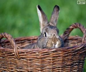 Kaninchen in einem Weidenkorb puzzle