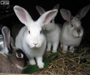 Kaninchen in ihren Höhlen puzzle