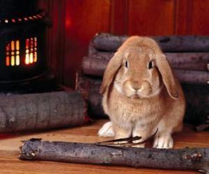 Kaninchen neben dem Feuer puzzle