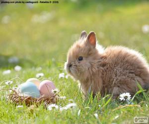 Kaninchen und Easter eggs puzzle