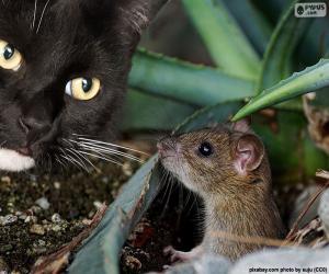 Katz und Maus puzzle