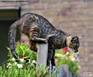 Katze auf einem Zaun puzzle