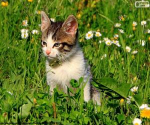 Katze im Feld puzzle