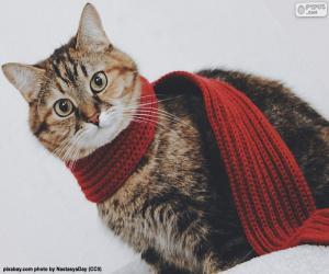 Katze im Schal puzzle
