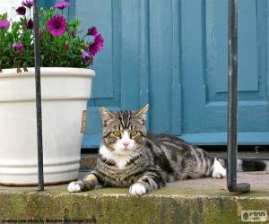 Katze und Blumentopf puzzle