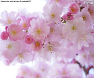 Kirschblüten puzzle