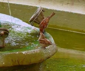 Kleine Vögel beim Planschen in einem Brunnen puzzle