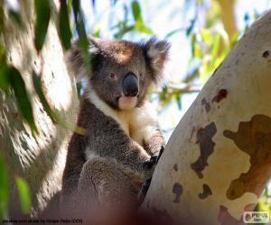 Koala im Baum puzzle