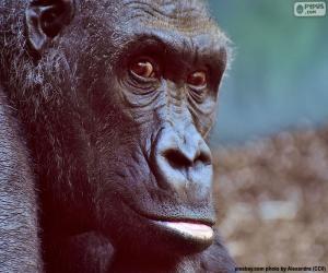 Kopf der Gorilla puzzle