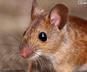 Kopf der Maus puzzle