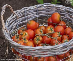 Korb mit Tomaten puzzle