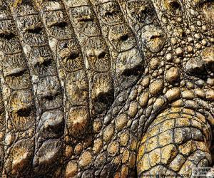 Krokodilleder puzzle