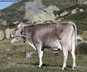 Kuh im Hochgebirge puzzle