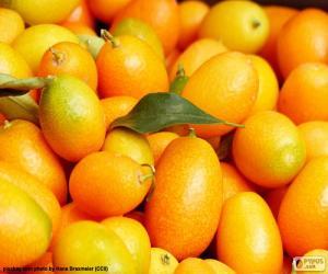 Kumquat puzzle