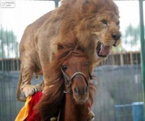 Löwe und Pferd machen ihre Zirkusvorstellung puzzle