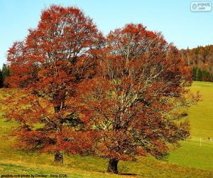 Laubgehölze-Bäume puzzle