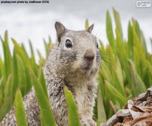 Leiter der Eichhörnchen puzzle