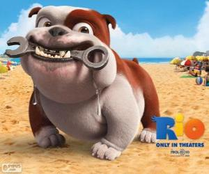 Luiz, eine Bulldogge puzzle